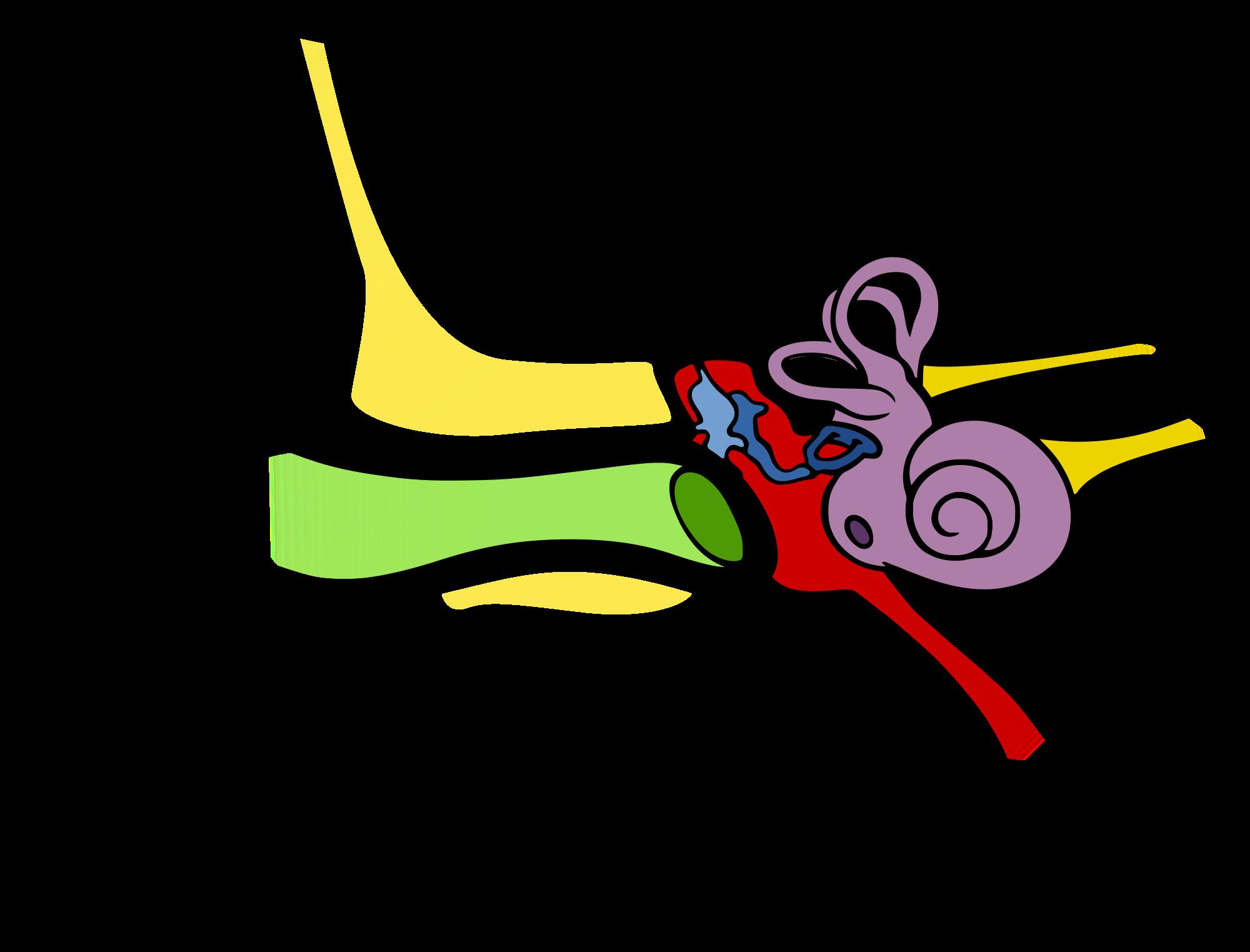 Adenotomia z tympanostomią